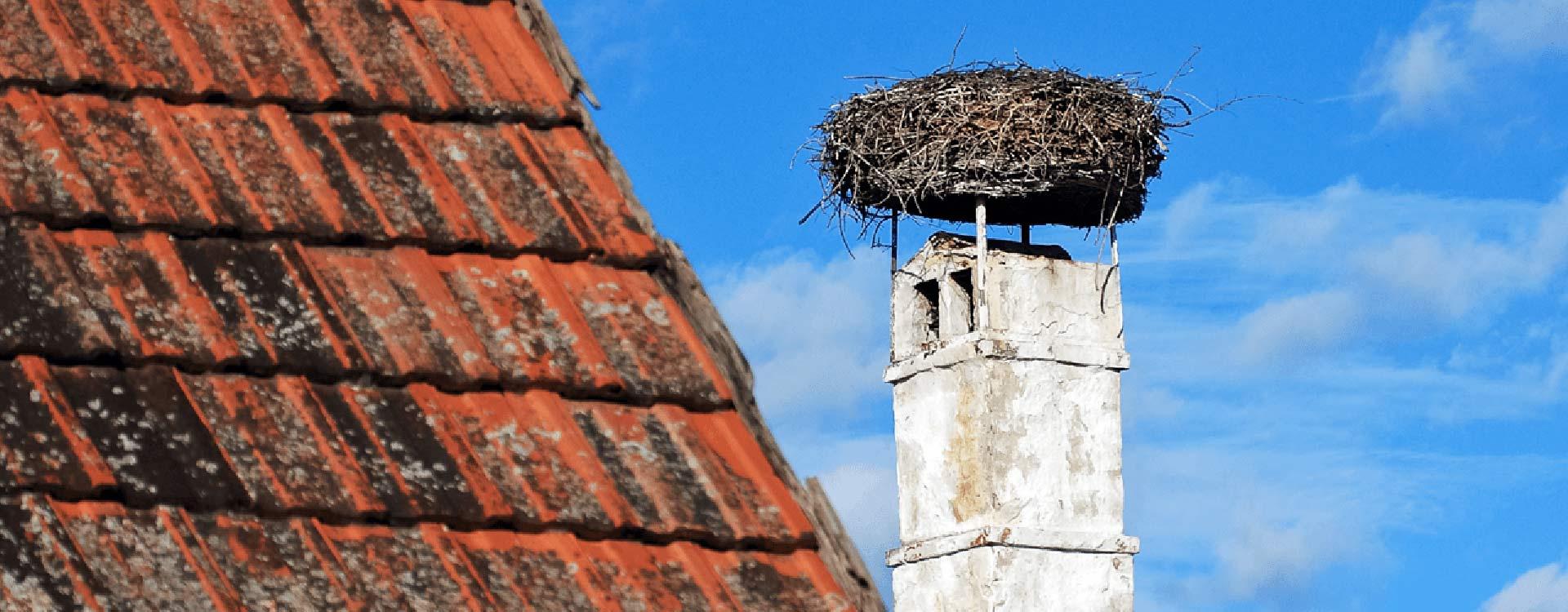 Bird Nest Removal Ware Hertford Amp Stanstead Archway